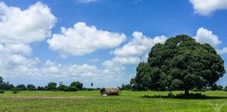 Zanzibars landsbygd