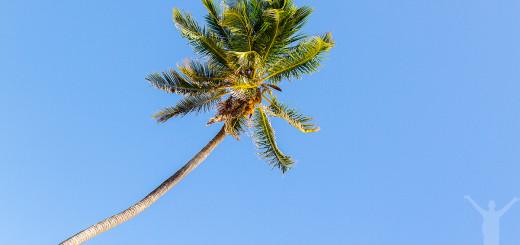 palmtree-zanzibar