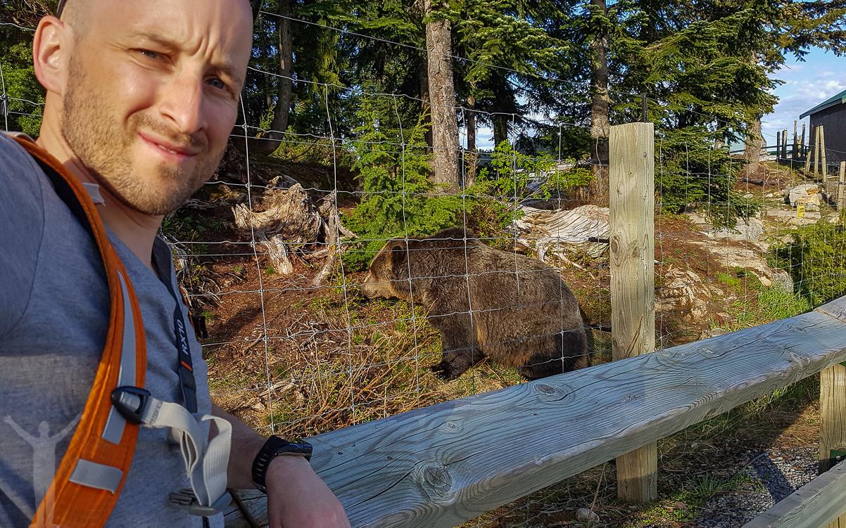 Grizzlybjörn på Grouse Mountain