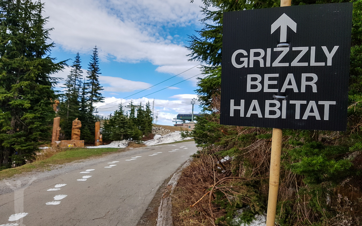 Grizzlybjörnsreservat