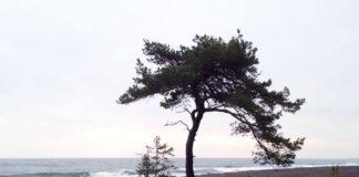 Gotland - Furilden. Foto: Sofia Zetterqvist / Fantasiresor.se