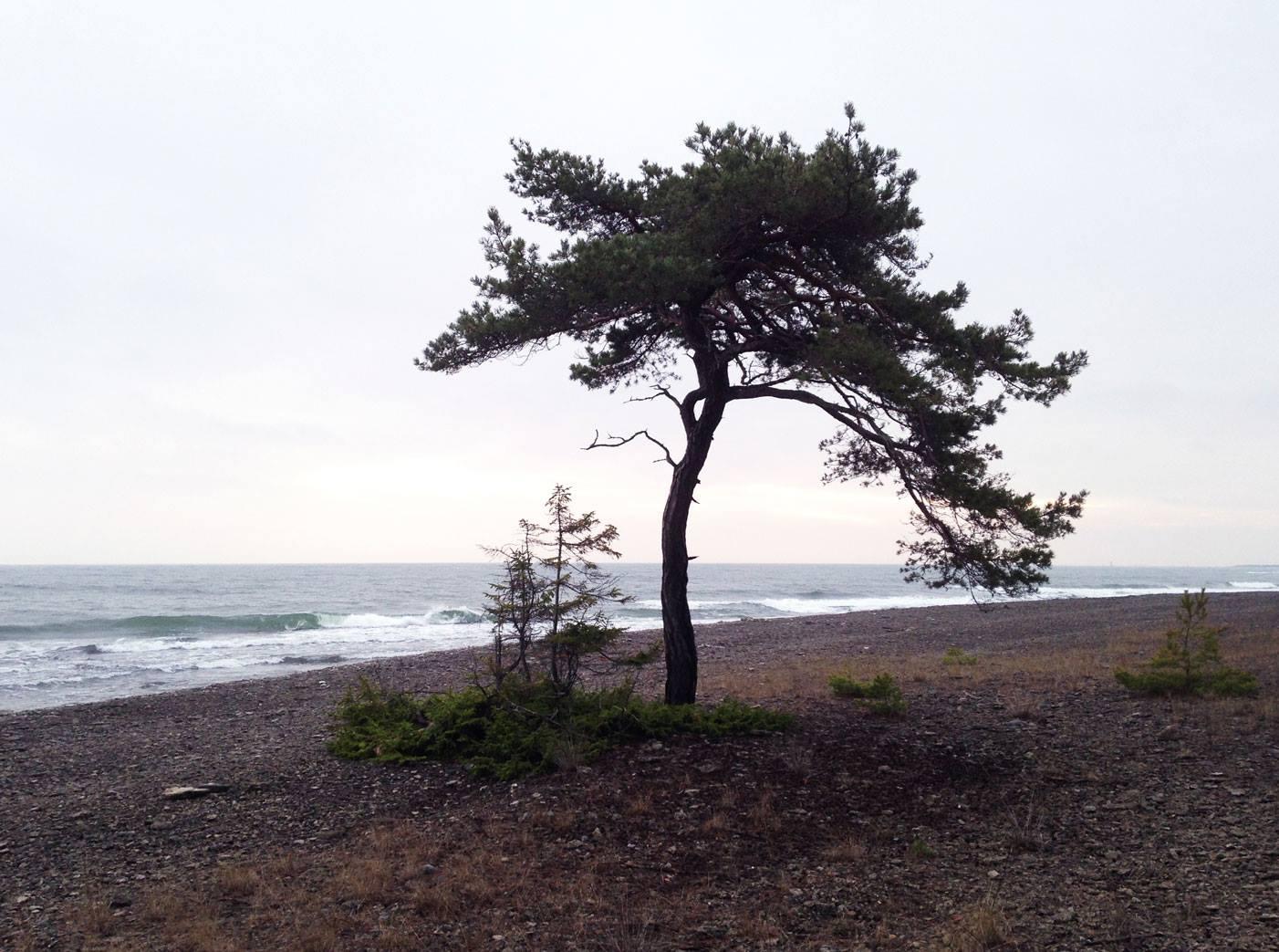 Gotland - Furilden
