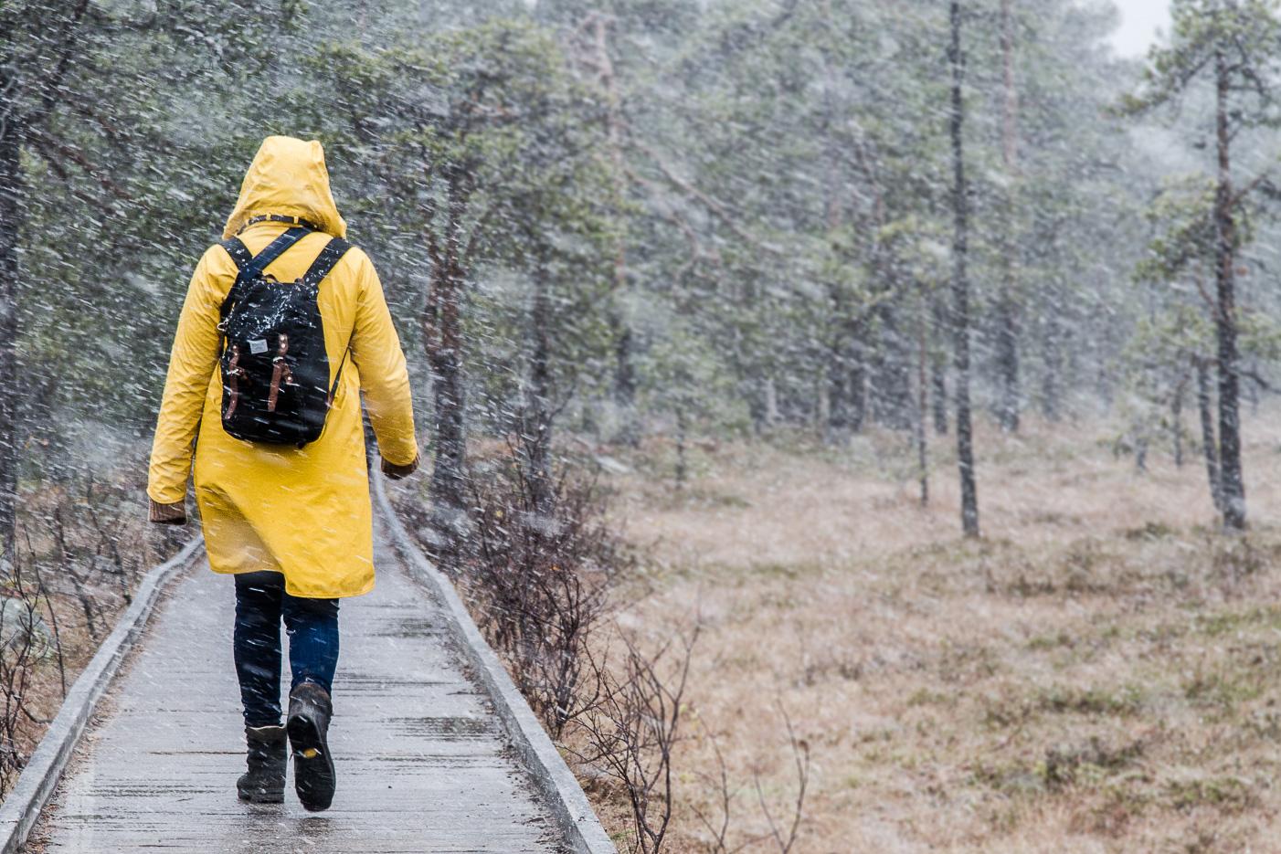 Snöfall i Fulufjällets nationalpark