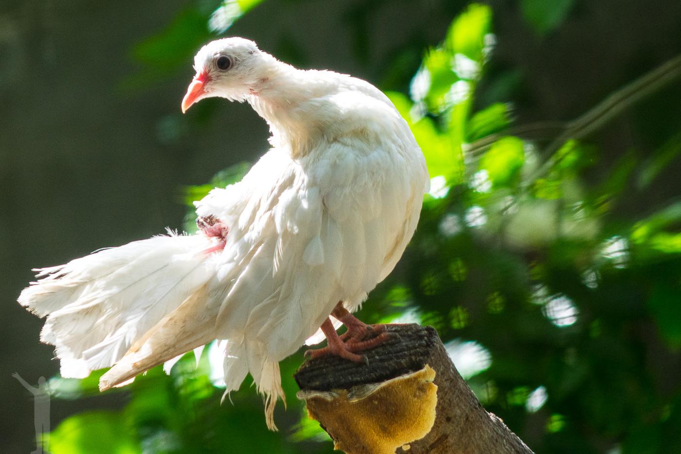 Okänd fågel på Casela naturpark på Mauritius