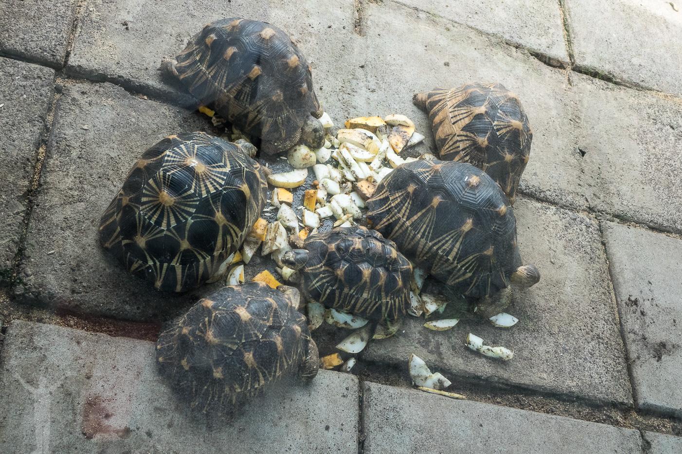 Minisköldpaddor äter lunch