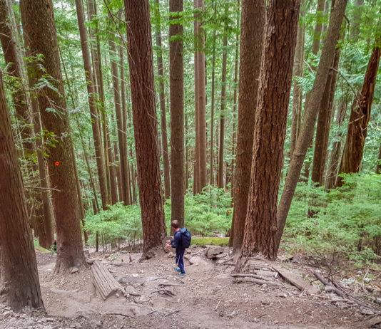 Branta stup längs BCMC Trail
