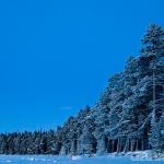 Skogsvägg