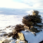 Toppröse, Norge i bakgrunden.