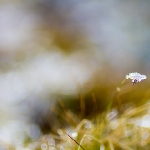 Frost på fjället