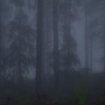 I skogen bor trollen.
