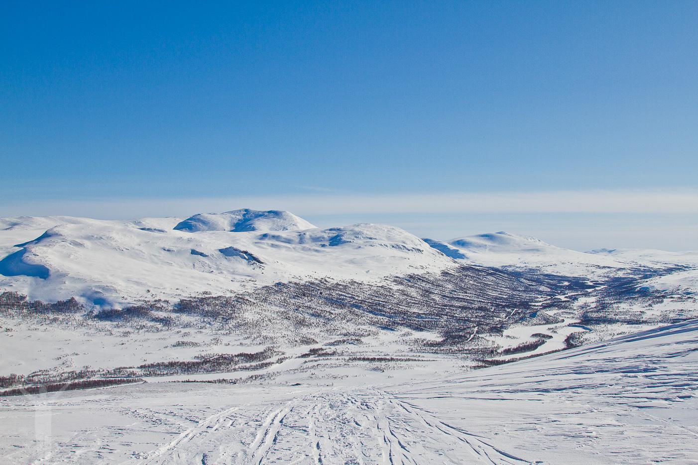 Storulvån i Jämtland