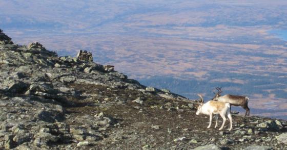 Storsnasens topp, 20111001