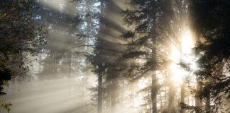 Magisk dimma på Frösön