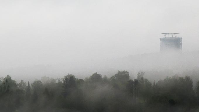 Arctura i regnet
