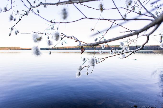 Björkskogsnäs naturreservat
