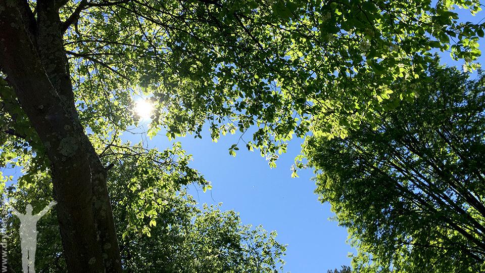 Under trädkronorna