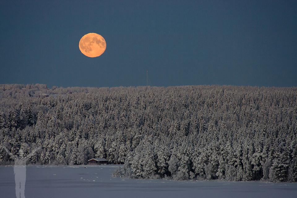 Fullmånen stiger upp över träden