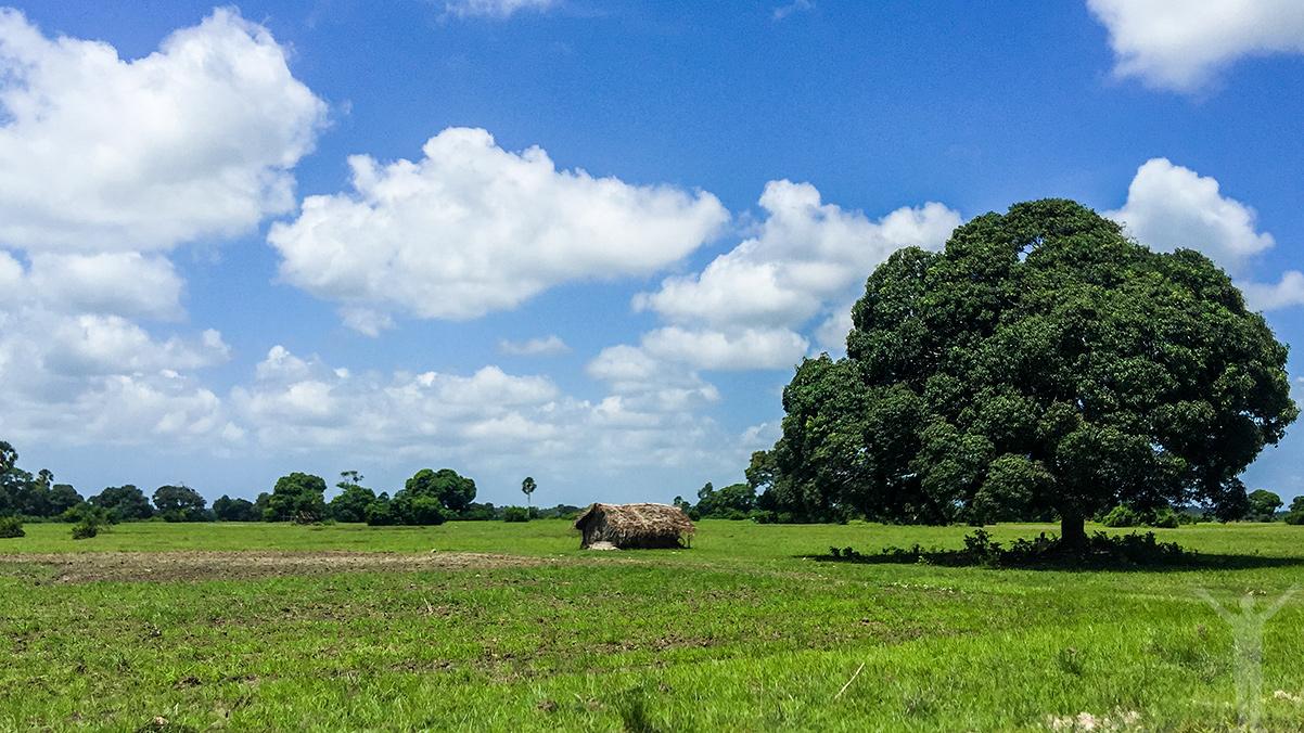 Afrikansk landsbygd