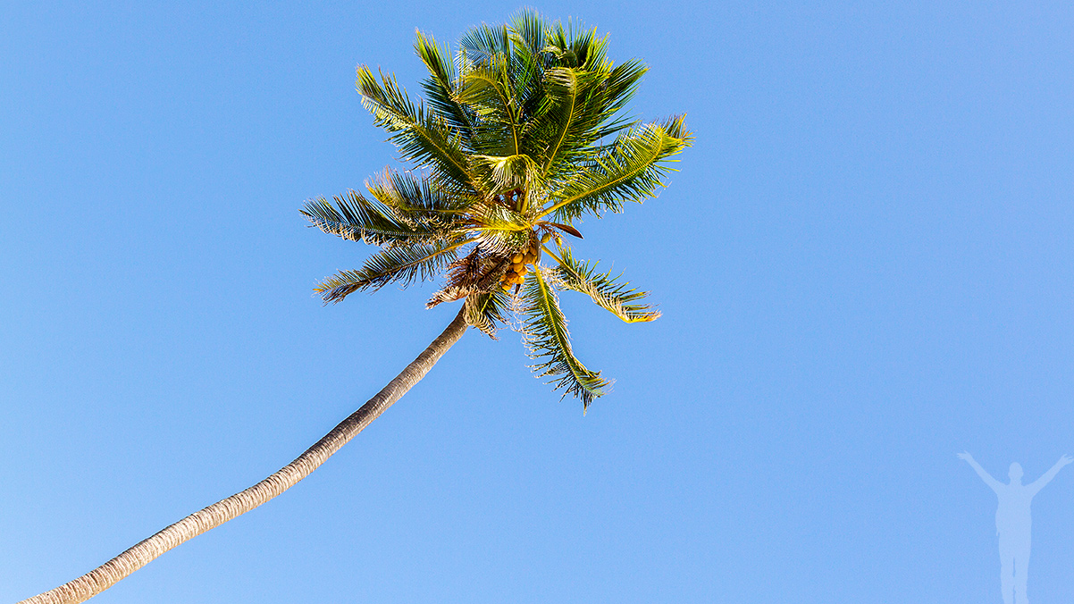 Palm på Zanzibar
