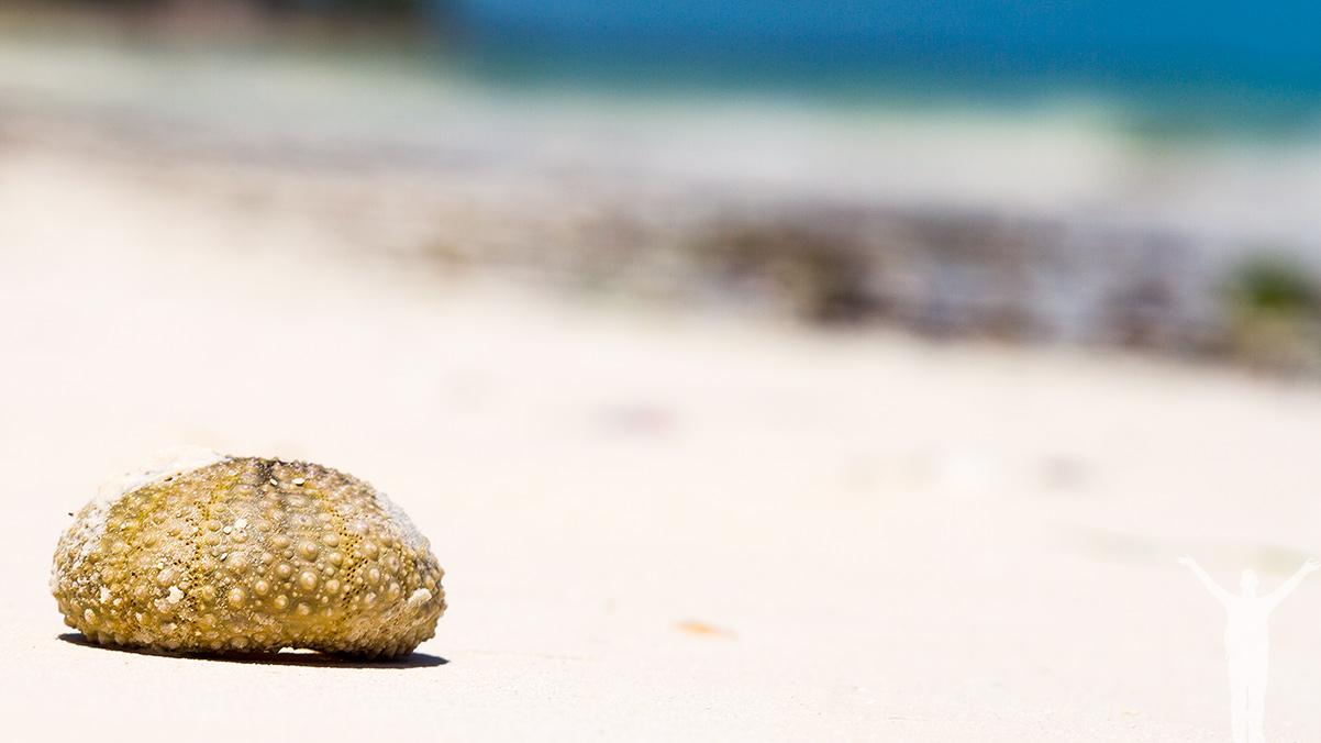 Snäckskal på Zanzibar