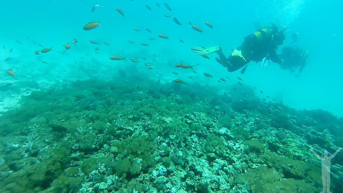 Dykning vid Mnemba Island