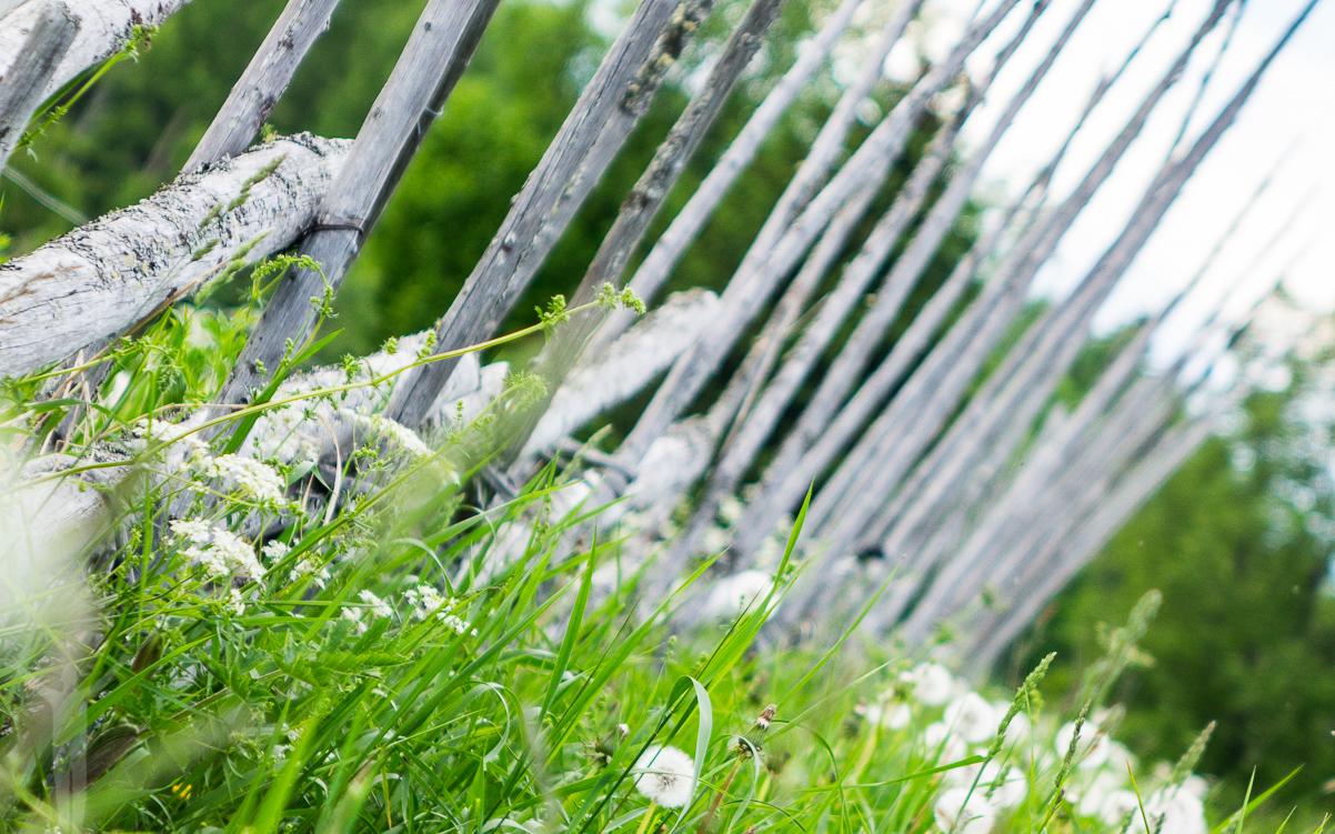 Gärdsgårdar på Frösön