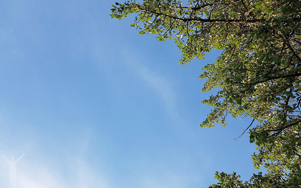 En promenad under blå himmel