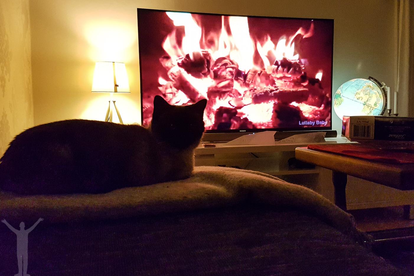 Zelda värmer sig framför brasan