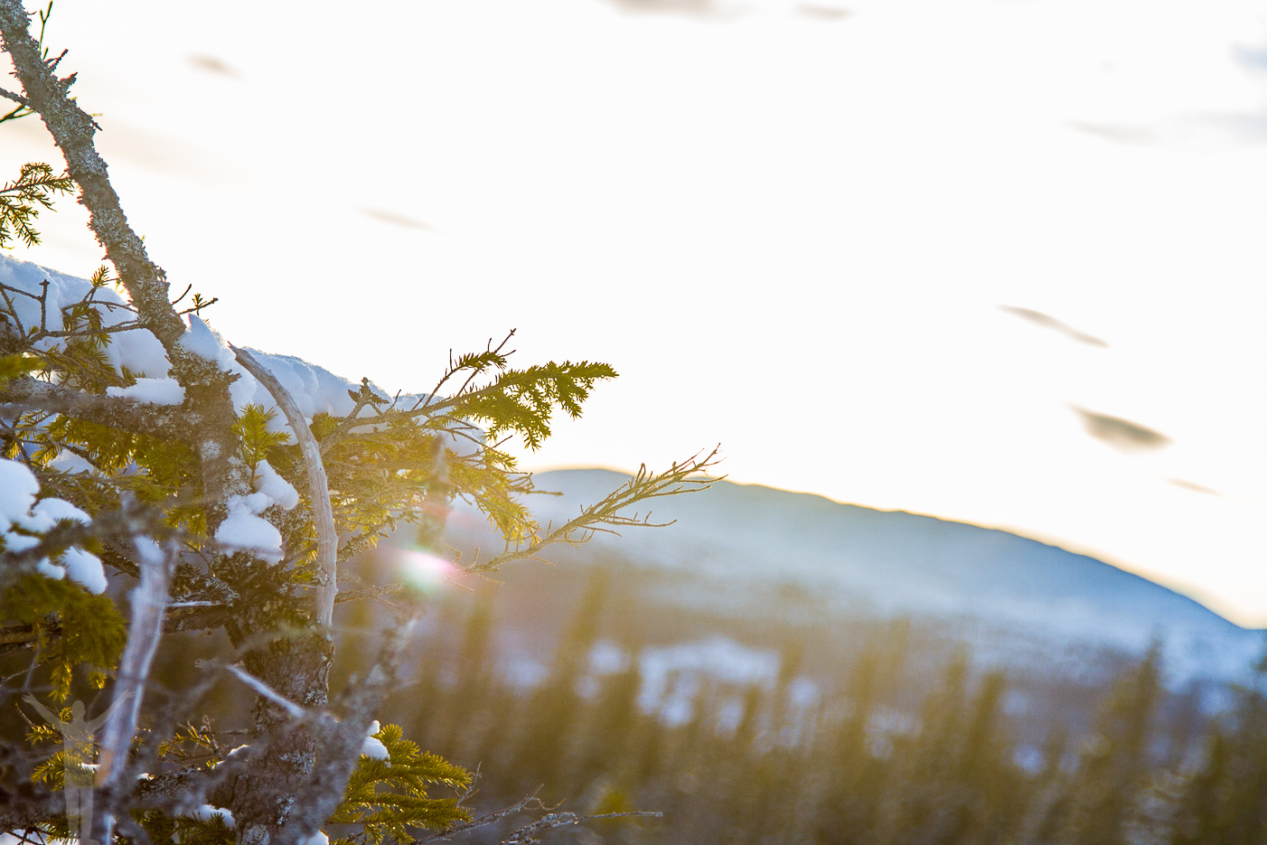 Vinter i Jämtland