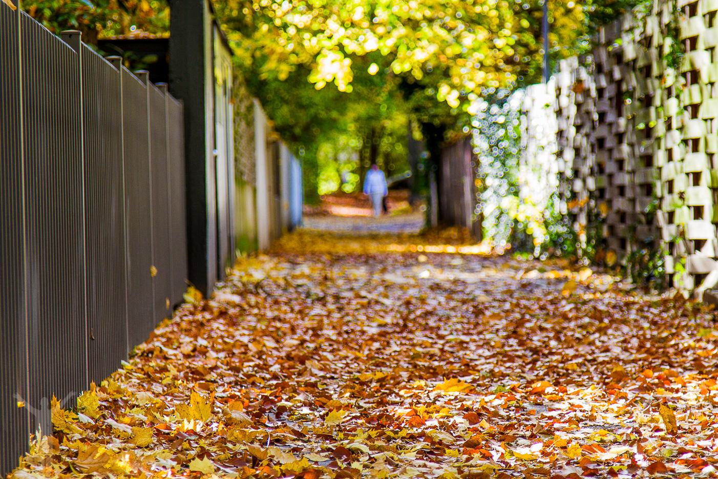 Höstpromenad bland löven