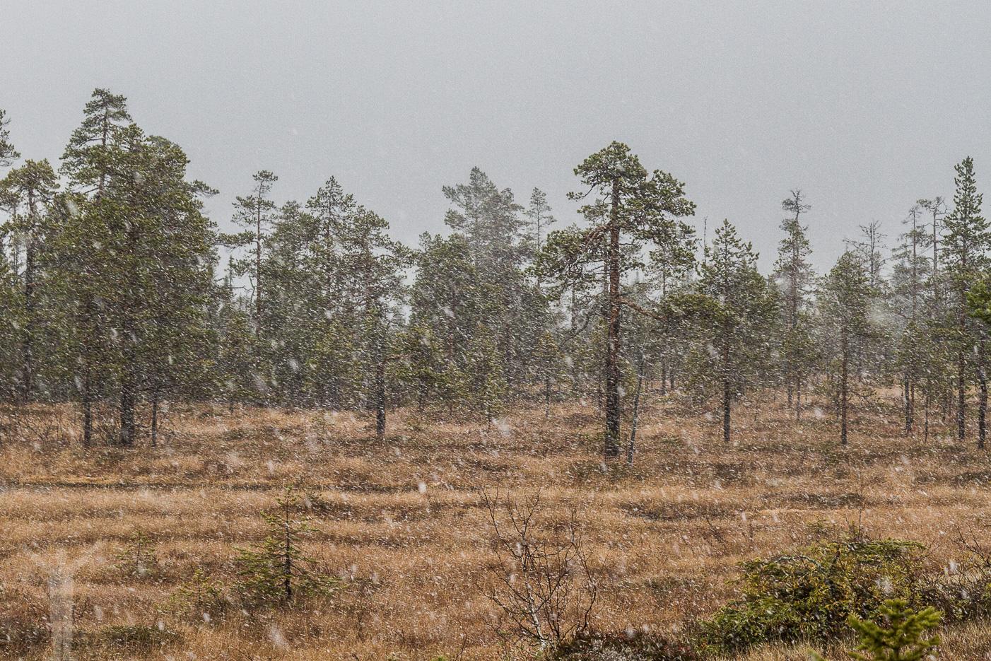 Snöfall i Dalarna