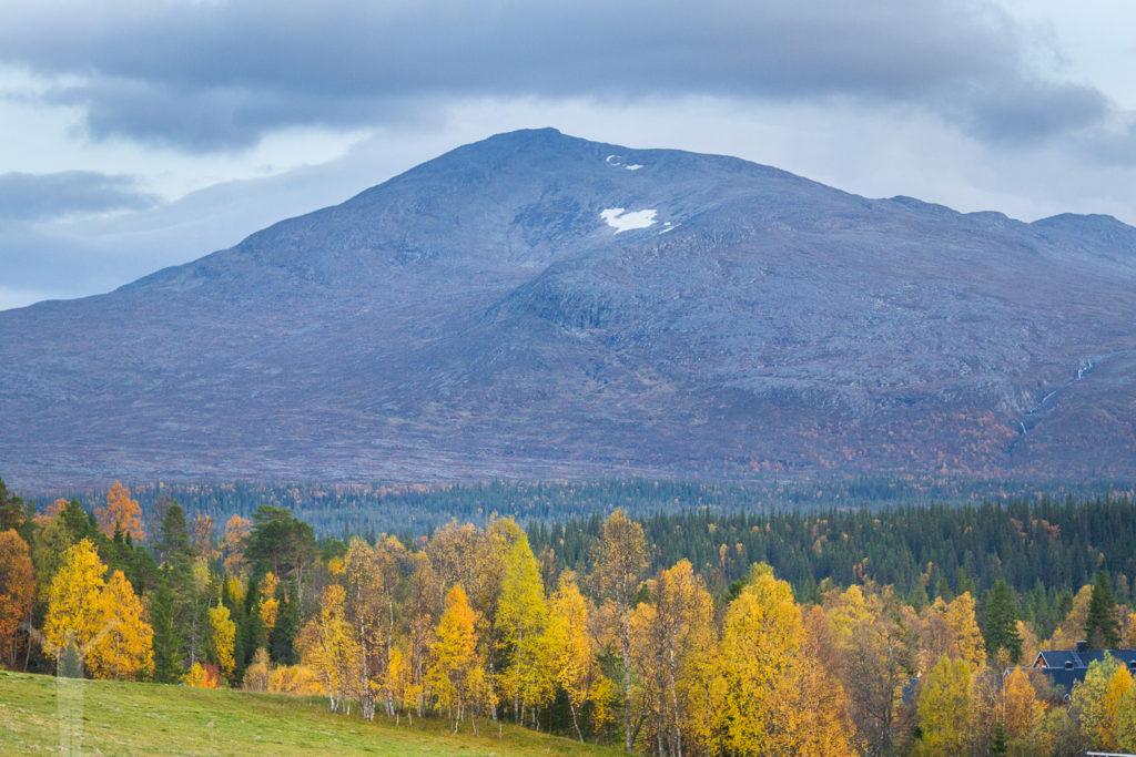 Storsnasen i Jämtland