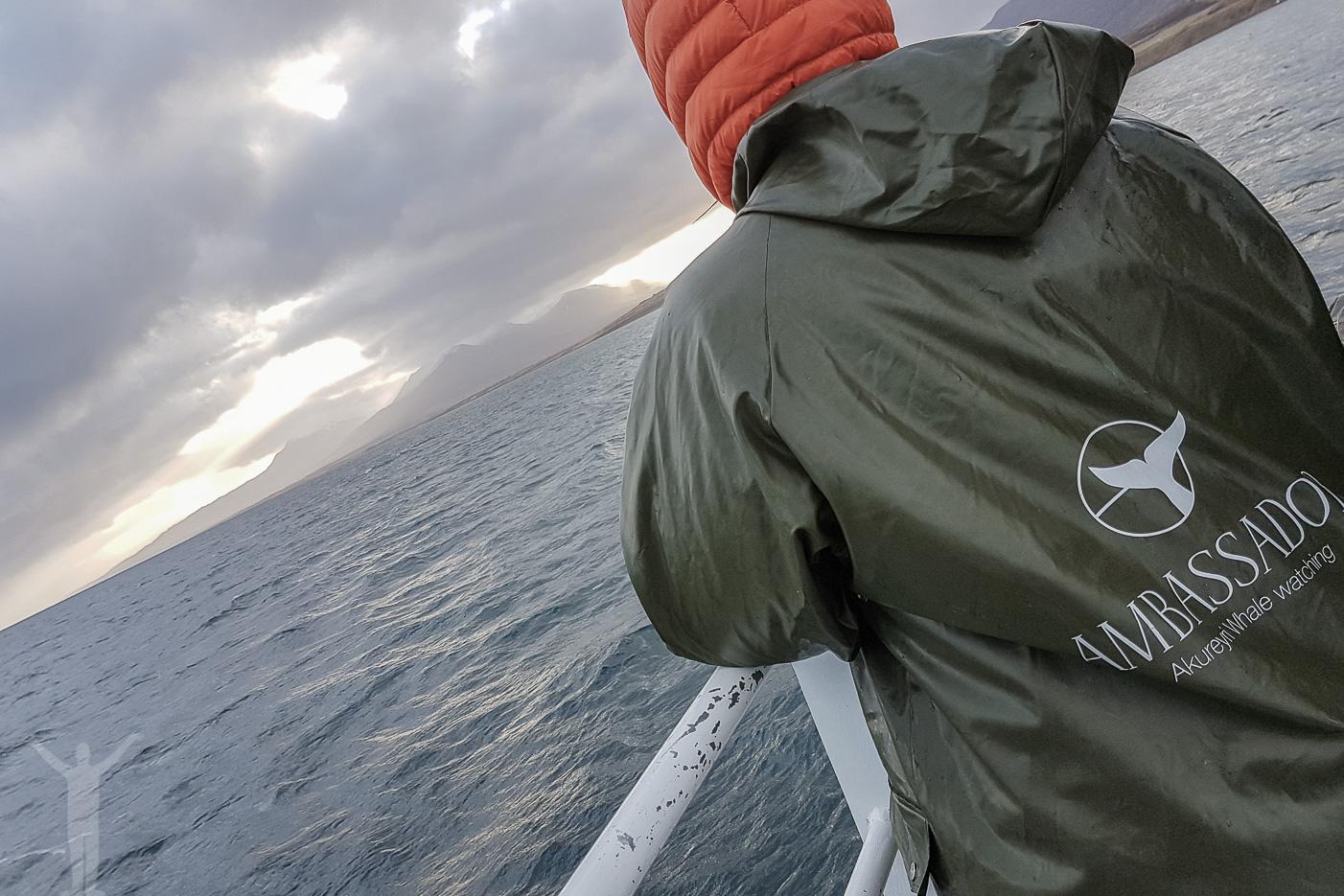 Ambassador Whale Watching - Akureyri