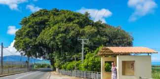 Busshållplats på Mauritius
