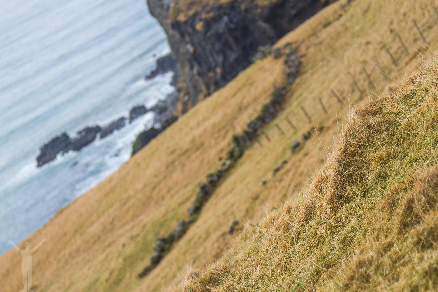 Gult gräs på Färöarna