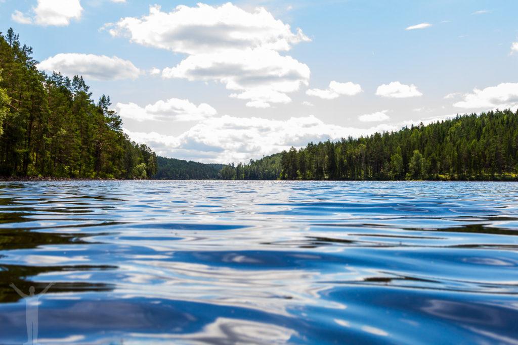 Dalslands djupa skogar
