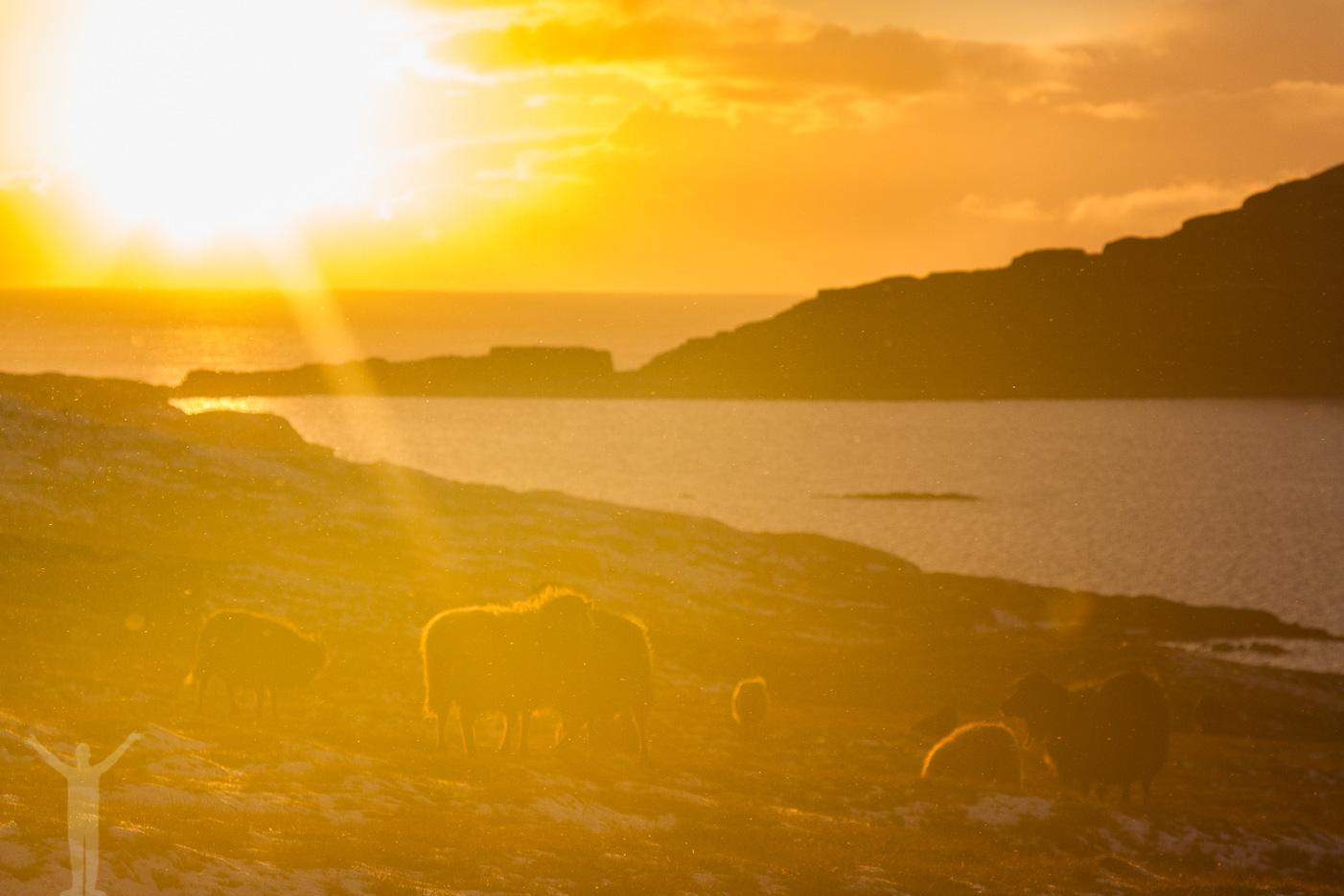 Solnedgång på Färöarna
