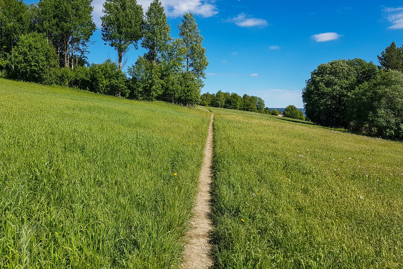 Löpning på Frösön