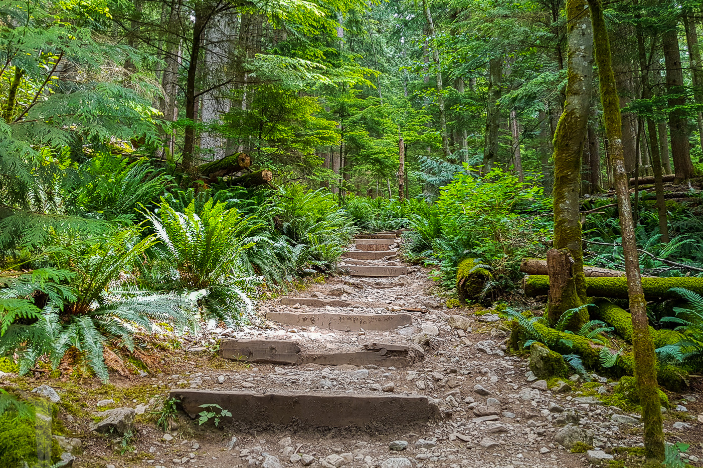 Starten av BCMC Trail