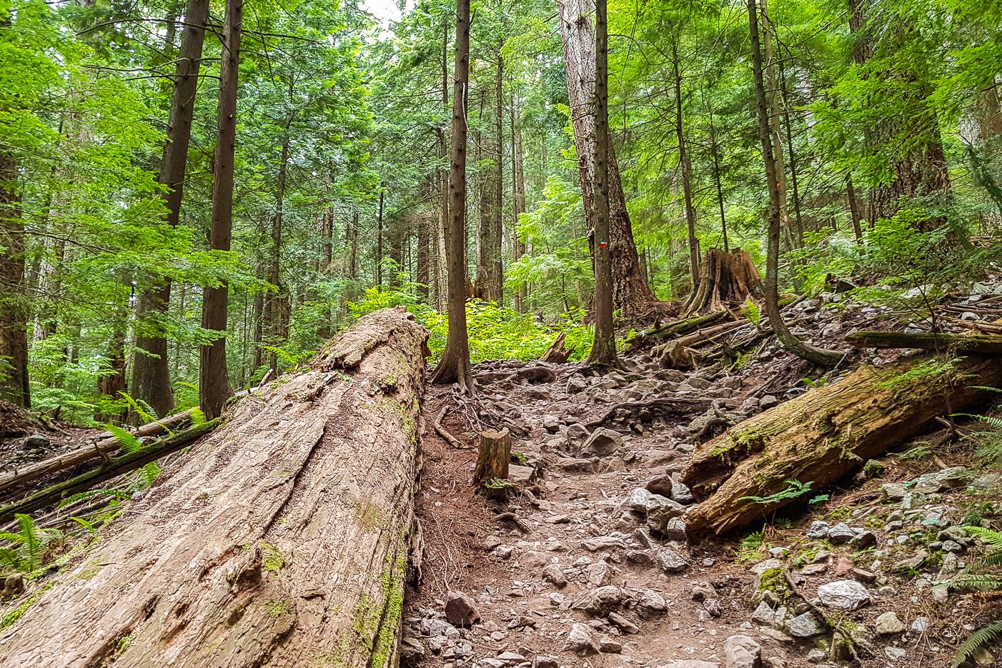 Vacker natur längs BCMC Trail