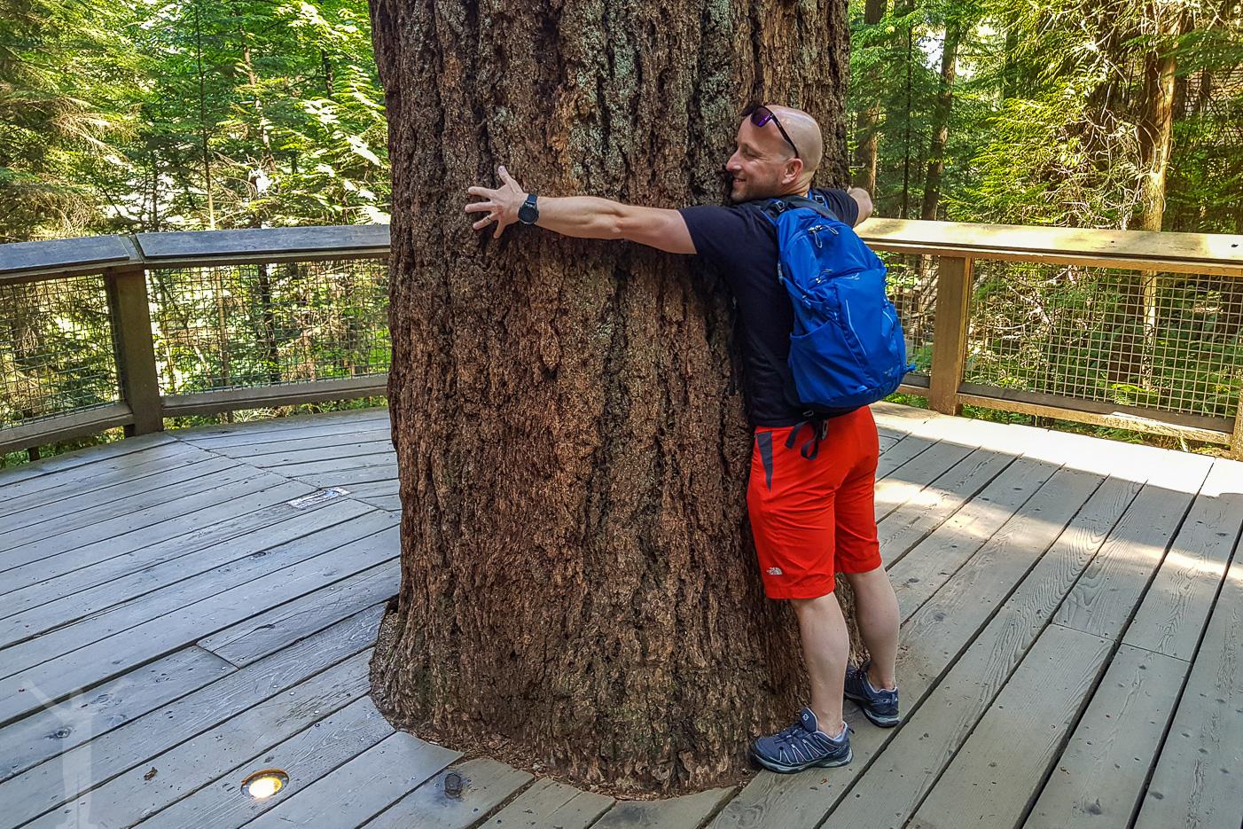 Dryden goes trädkramare