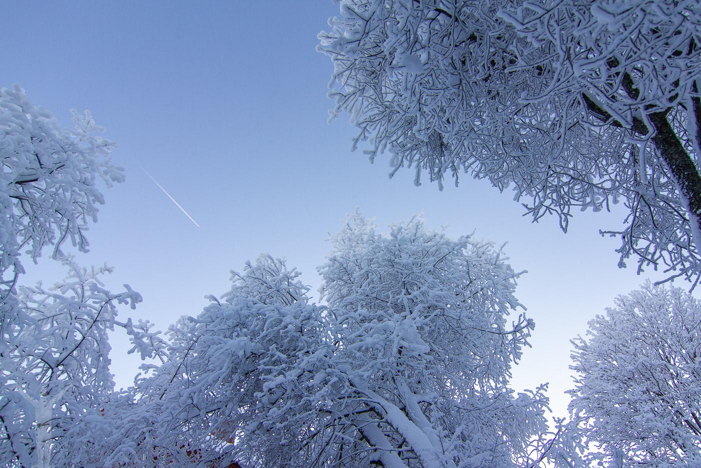 Snötyngda träd i Skärgår'n