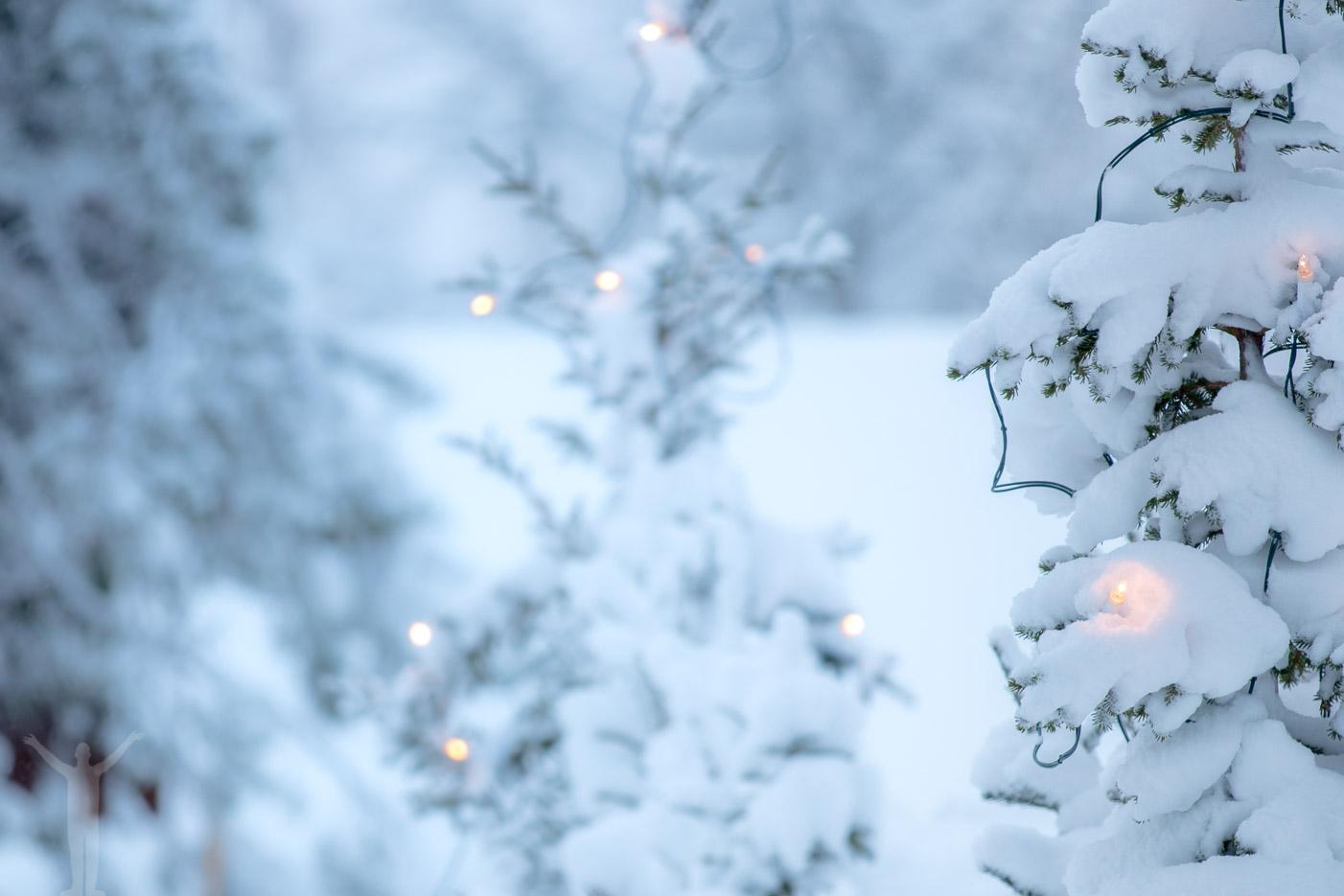 Julgran på Jamtli
