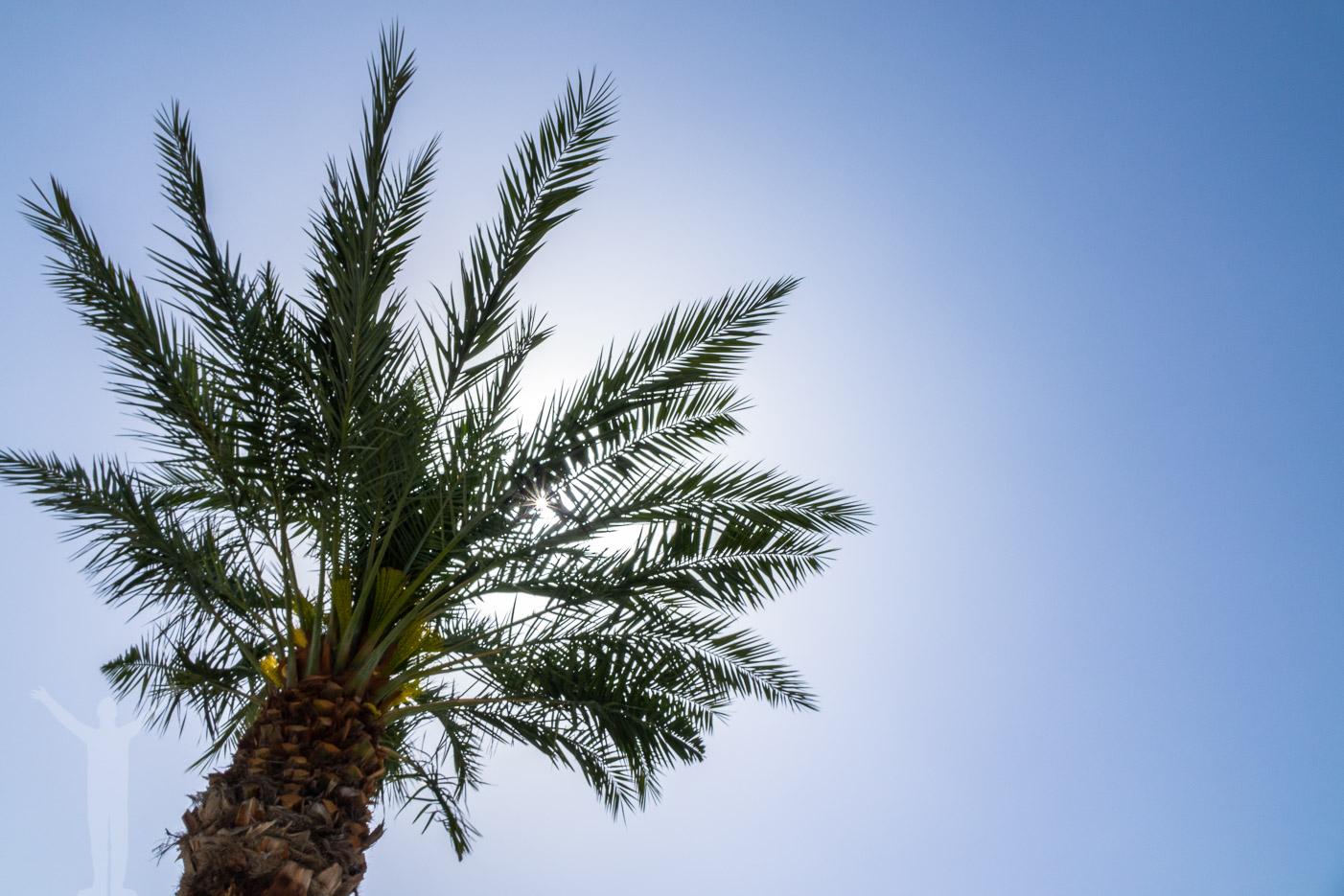 Palm i Doha, Qatar