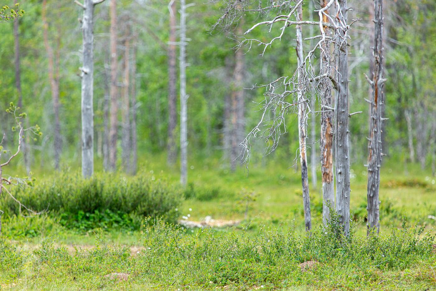 I skogen hör inte träden när de faller