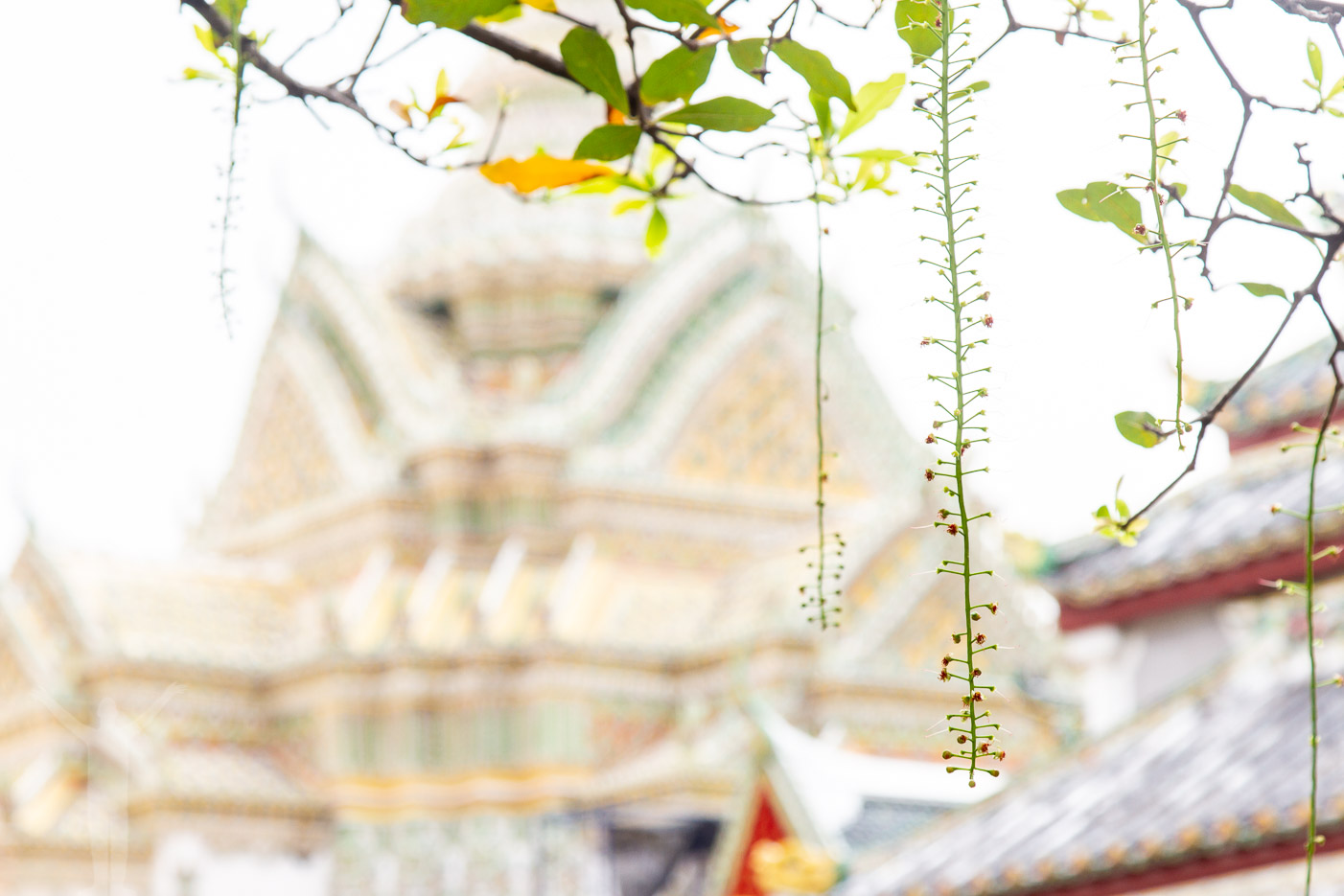 Bland alla tusen tempel i Bangkok.