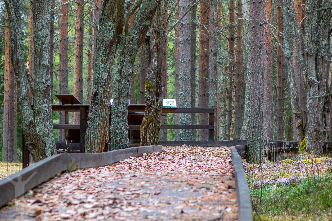 Undromsskogen på Rödön