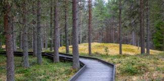 Undromsskogen på Rödön är tillgänglig för de flesta