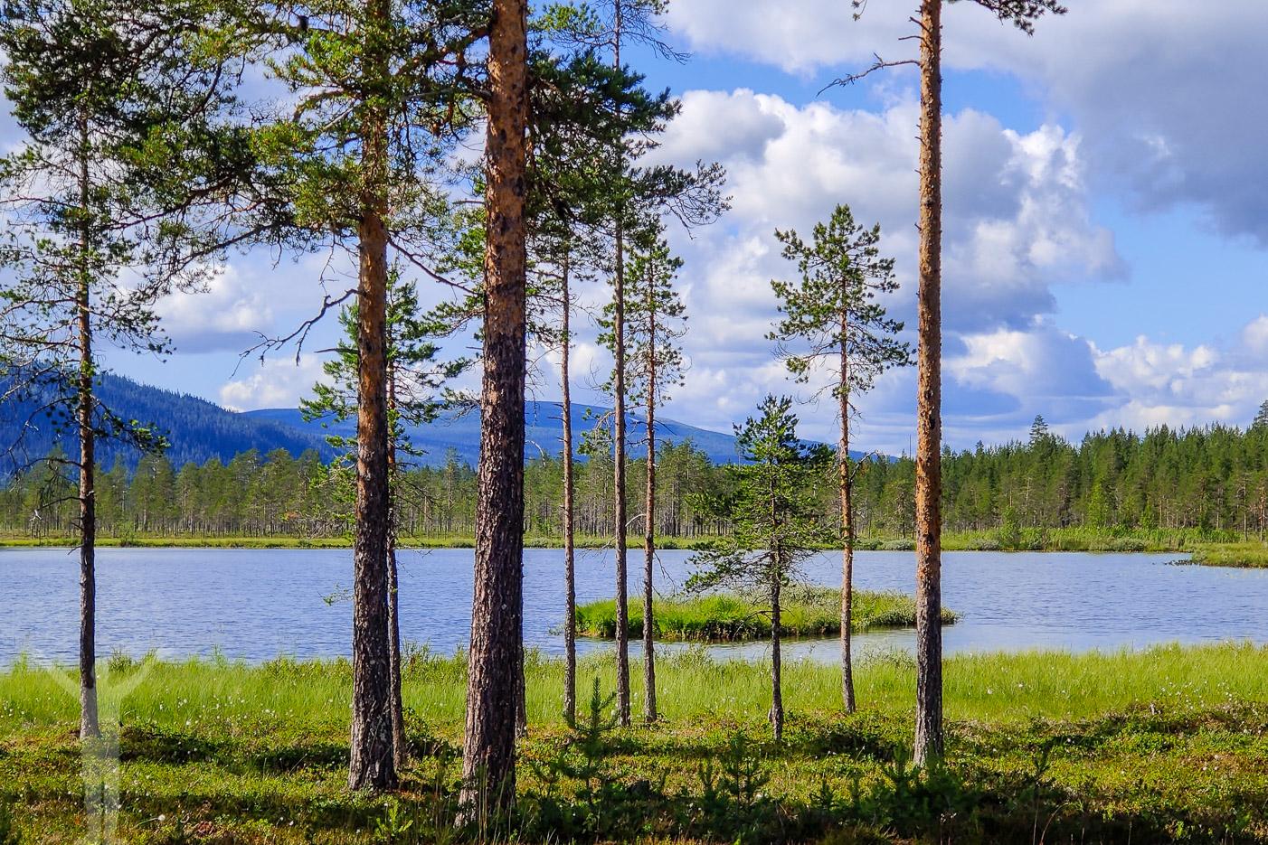 Naturnära golfbana i Klövsjö