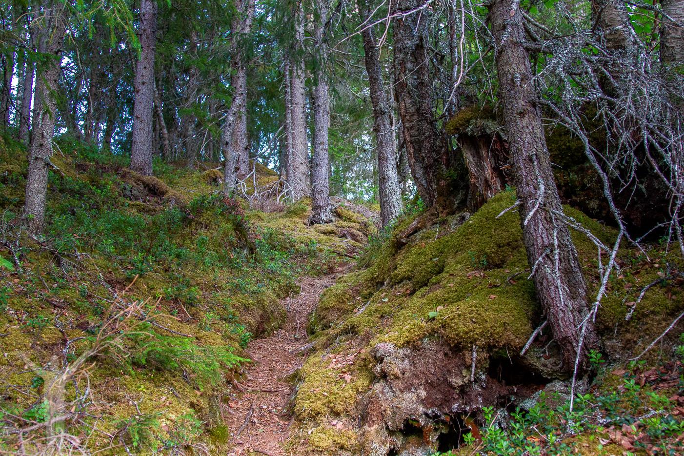 Stig i skogen till nedre delen av vattenfallet